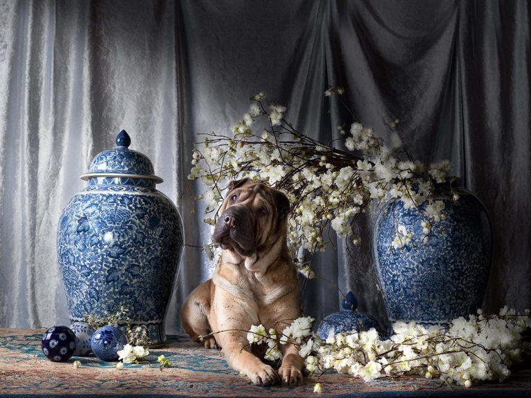 Hond in de Pot